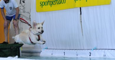 Splash Dog! Sport acquatici per i nostri cani