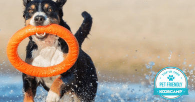 I 10 migliori Campeggi e Villaggi pet friendly in Italia